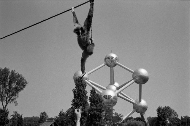 BELGIUM. Brussels. 1/06/1982: Zoo near the Atomium.